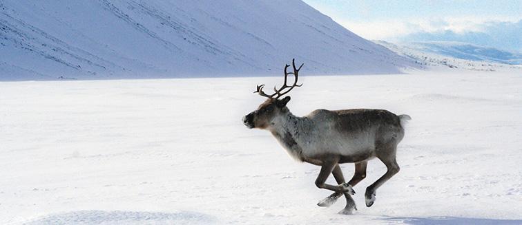 Lapland - Kuusamo