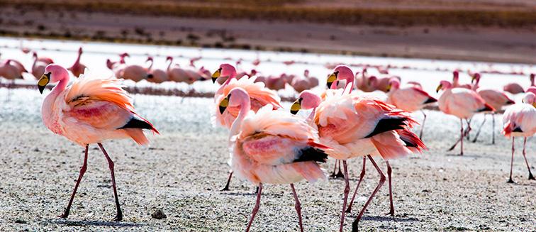Reserva Nacional Los Flamencos
