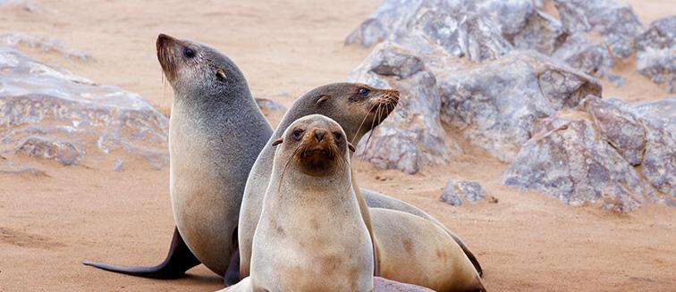 Skeleton Coast & Cape Cross